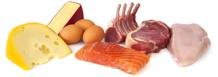A Look at the Significance of Protein